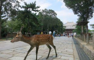 奈良の観光を